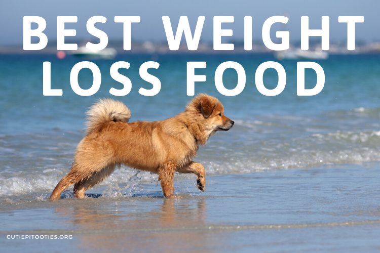 Best Dog Food For Weight Loss 2020 Review Dog Digz