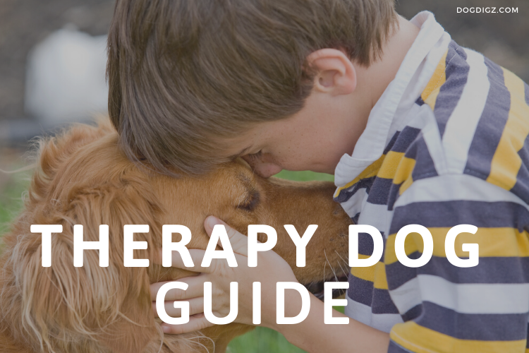 https://dogdigz.com/therapy-dog-autism/